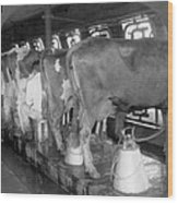 Dairy Farm, C1920 Wood Print