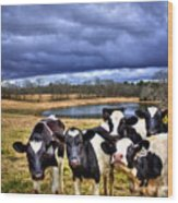 Dairy Heifer Groupies Future Chick-fil-a Starrs Wood Print