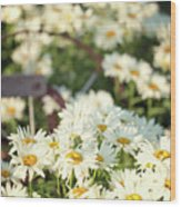 Daisies And A Hand Plow Wood Print