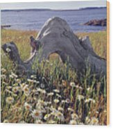 136236-daisies And Driftwood  Wood Print