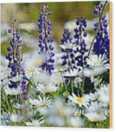 Daisies And Lupine Wood Print