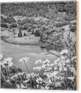 Daisies At Queens View In Greyscale Wood Print