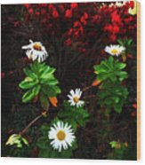 Daisies At The Boathouse Wood Print