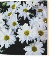 Daisies By The Dozen Wood Print