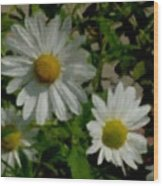 Daisies By The Number Wood Print