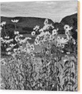 Daisies By The Roadside At Loch Linnhe B W Wood Print