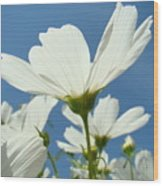 Daisies Floral Art Prints Canvas Daisy Flowers Blue Skies Wood Print