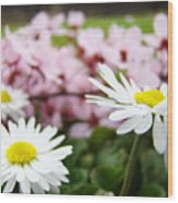 Daisies Flowers Art Prints Spring Flowers Artwork Garden Nature Art Wood Print