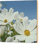 Daisies Flowers Art Prints White Daisy Flower Gardens Wood Print
