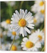 Daisies Flowers Field Blurriness 107162 2048x2048 Wood Print
