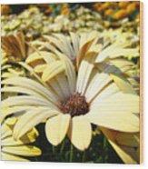 Daisies Flowers Landscape Art Prints Daisy Floral Baslee Troutman Wood Print