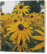 Daisies From Niagara Wood Print