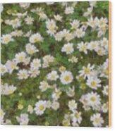 Daisies In Spring Wood Print