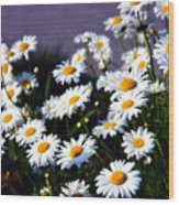 Daisies Wood Print by Lana Trussell