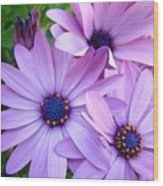 Daisies Lavender Purple Daisy Flowers Baslee Troutman Wood Print