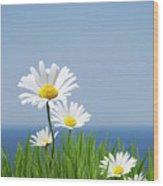 Daisies On A Cliff Edge Wood Print