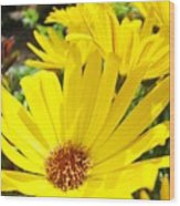 Daisies Summer Garden Art Print Yellow Daisy Baslee Wood Print