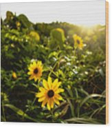 Daisies Tangled Sunrise Delray Beach Florida Wood Print
