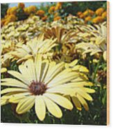 Daisies Yellow Daisy Flowers Garden Art Prints Baslee Troutman Wood Print