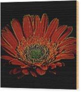 Daisy 105 Wood Print