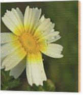 Daisy #5 Wood Print