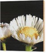 Daisy 6 Wood Print