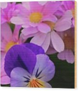 Daisy And Pansy Wood Print