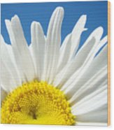 Daisy Art Prints White Daisies Flowers Blue Sky Wood Print