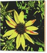 Daisy Bell Wood Print