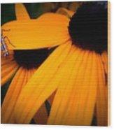 Daisy Bug Wood Print