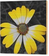 Daisy Crown Wood Print