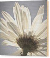 Daisy Wood Print