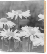 Daisy Daze Wood Print