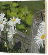Daisy Delight Wood Print