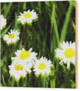 Daisy Dream Wood Print
