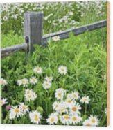 Daisy Fence Wood Print