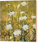 Daisy Field Wood Print