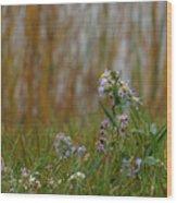 Daisy Fleabane Wood Print