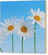 Daisy Flowers On Blue Wood Print
