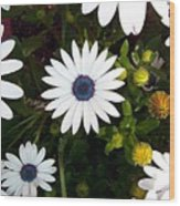 Daisy Forms Wood Print