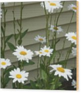 Daisy Garden Wood Print
