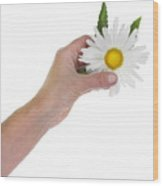 Daisy- Gentle Sun Wood Print