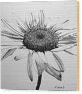Daisy II Wood Print