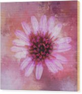 Daisy In Magenta Wood Print