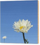 Daisy In The Sky Wood Print