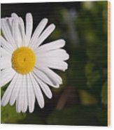 Daisy In The Sun Wood Print