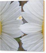Daisy  Magic Wood Print