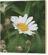 Daisy One Wood Print