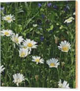 Daisy Patch  Wood Print