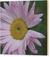 Daisy Power Wood Print